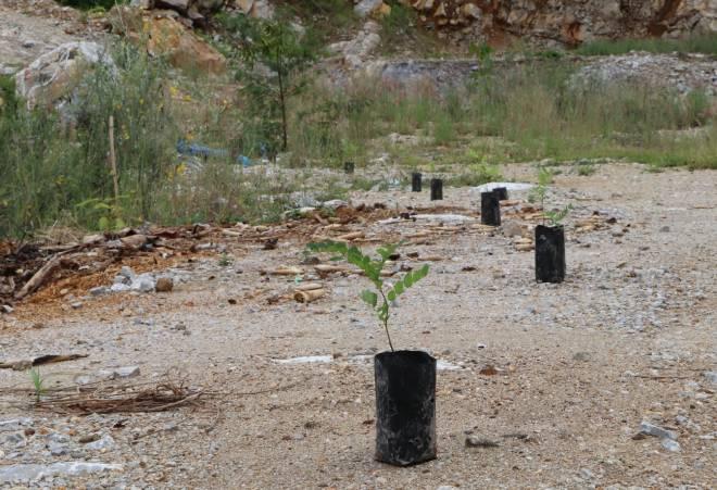 จับตา ! กลุ่มต้านเหมืองหินดงมะไฟรุกปลูกต้นไม้ฟื้นฟูเหมืองครั้งที่ 4 บนพื้นที่พิพาท 'เขตโรงโม่'